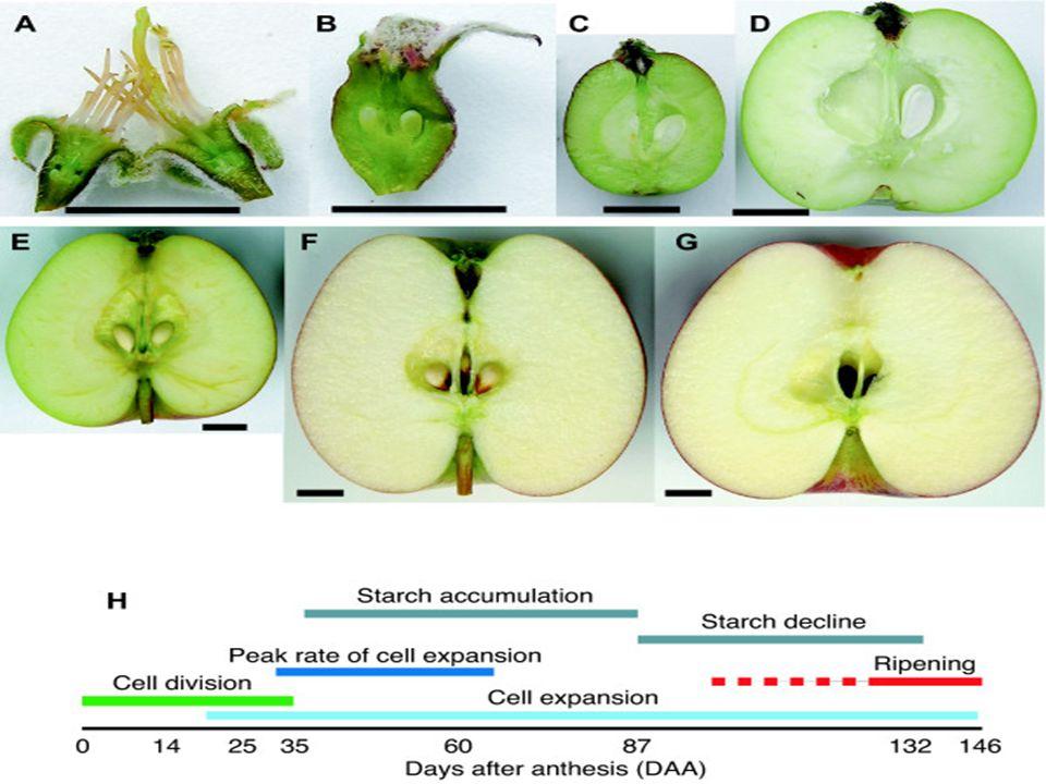 Fruit trees(pomology) - ppt video online download