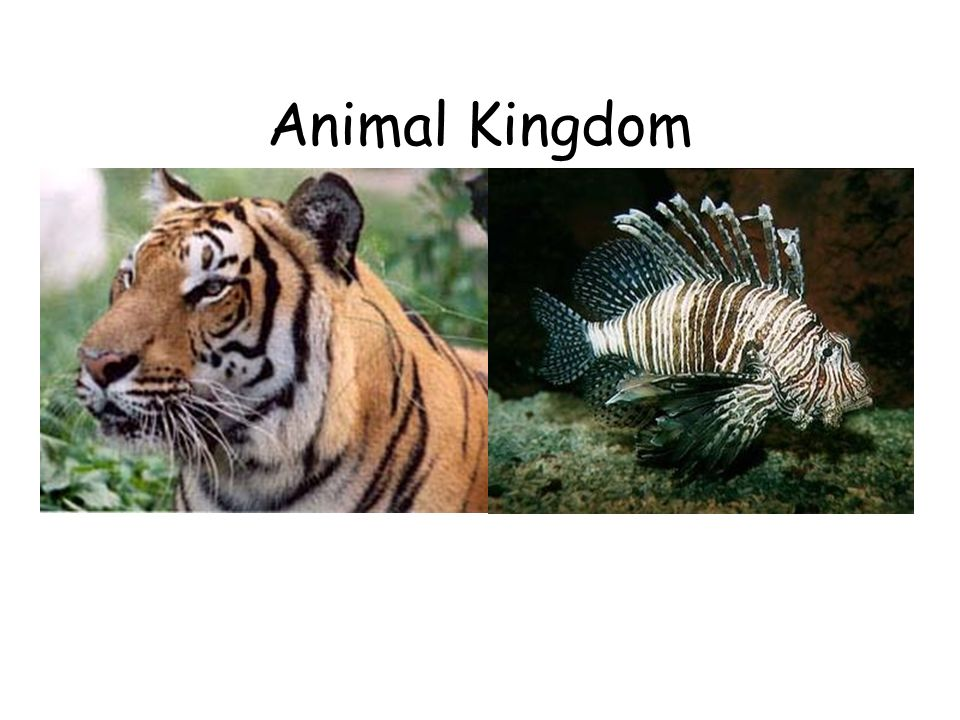 Image of: Phylum Porifera Animal Kingdom Wordpresscom Animal Kingdom Kingdomcharacteristics Of Kingdom Types Of Organisms