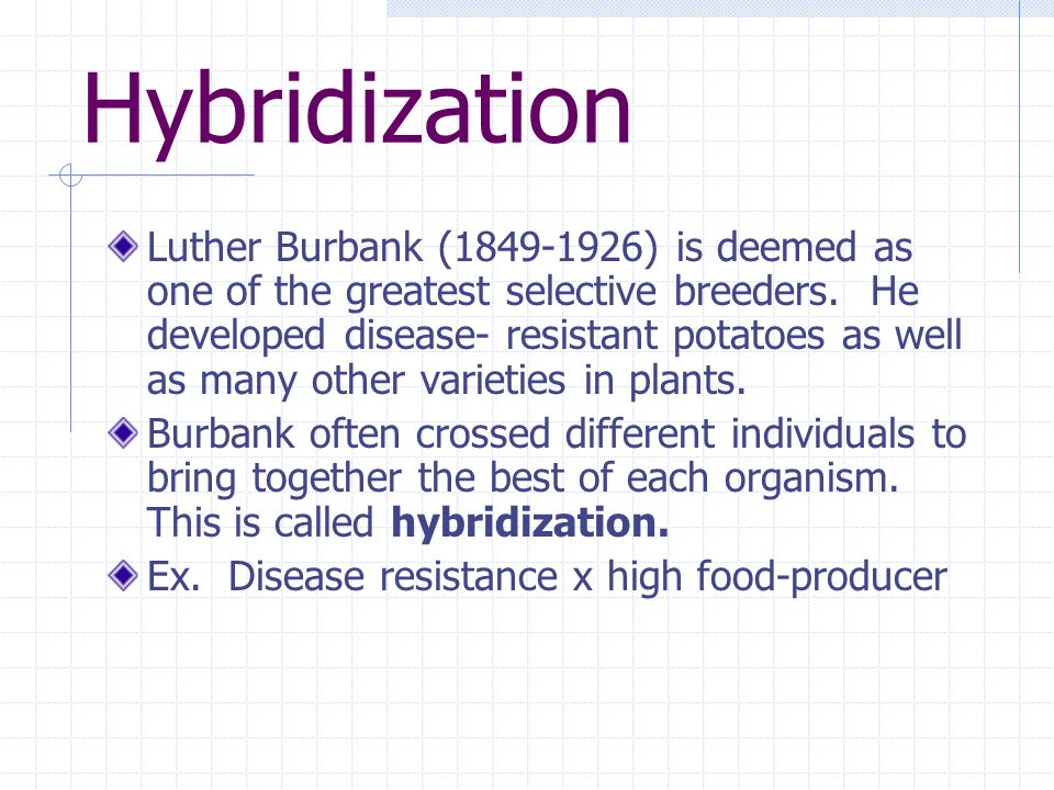 Hybridization Luther Burbank ( ) is deemed as one of the greatest selective breeders.