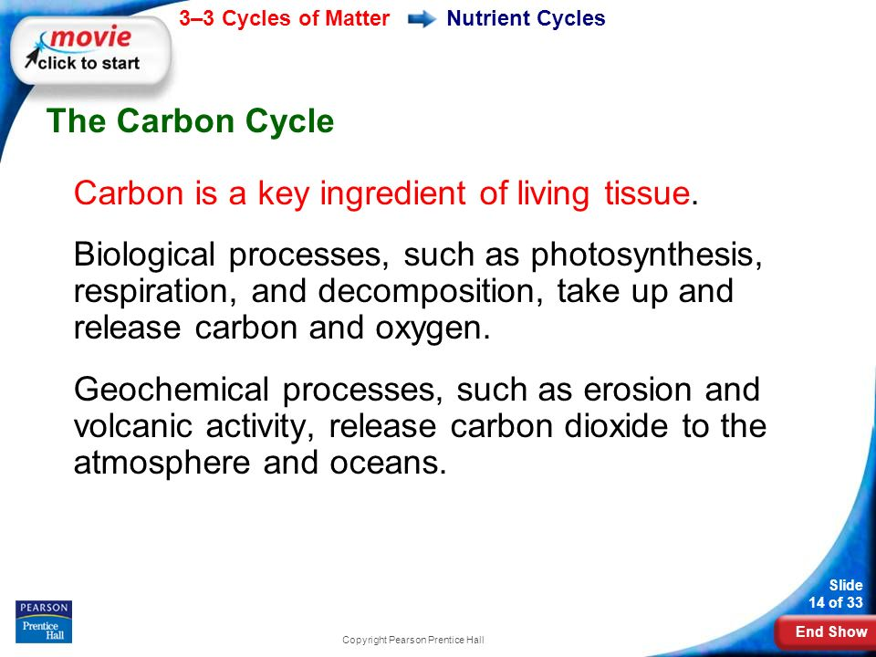 End Show 3–3 Cycles of Matter Slide 14 of 33 Copyright Pearson Prentice Hall Nutrient Cycles The Carbon Cycle Carbon is a key ingredient of living tissue.