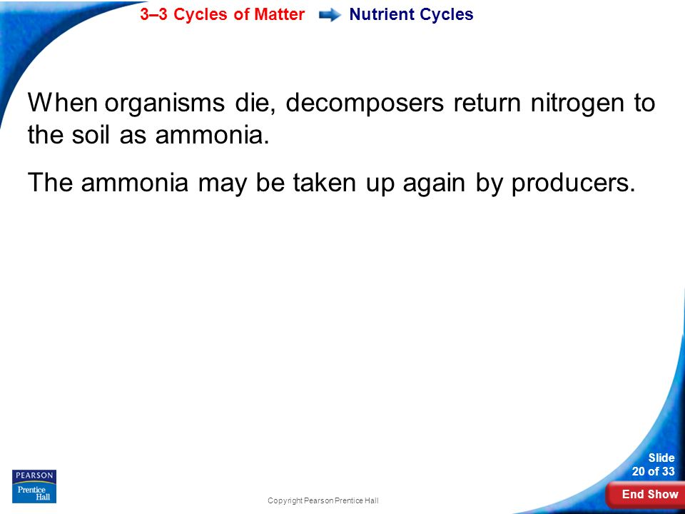 End Show 3–3 Cycles of Matter Slide 20 of 33 Copyright Pearson Prentice Hall When organisms die, decomposers return nitrogen to the soil as ammonia.
