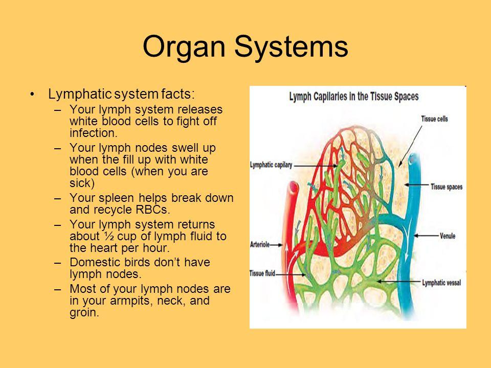 5 Levels Of Organization Cells Tissues Organs Organ Systems