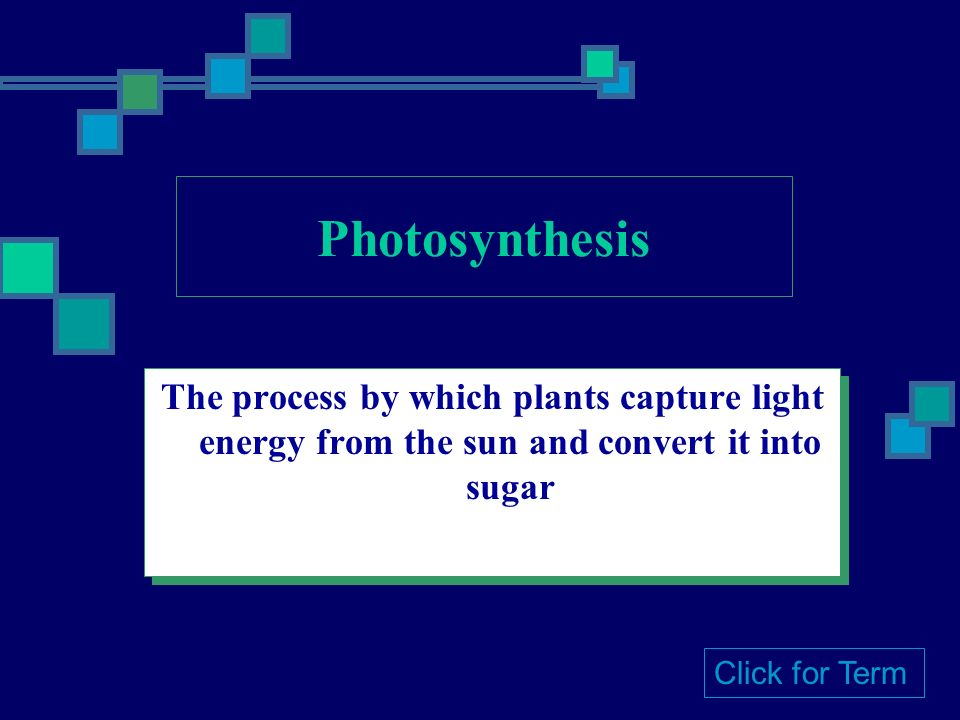 The process by which plants capture light energy from the sun and convert it into sugar Click for Term