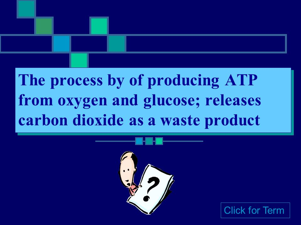 Photosynthesis The process by which plants capture light energy from the sun and convert it into sugar Click for Term