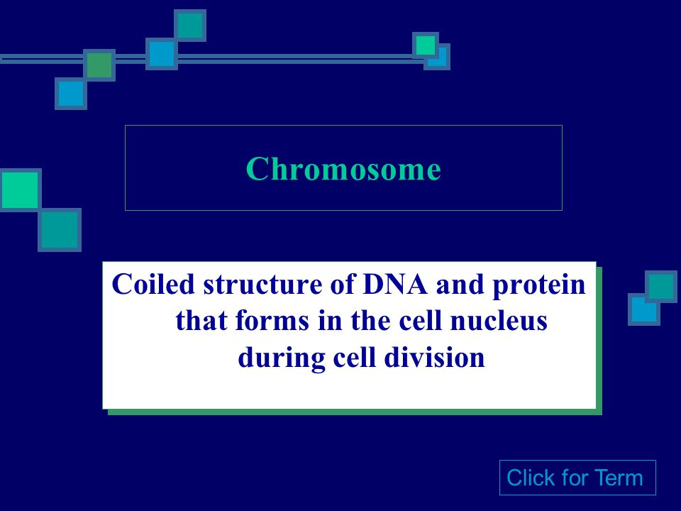 Coiled structure of DNA and protein that forms in the cell nucleus during cell division Click for Term