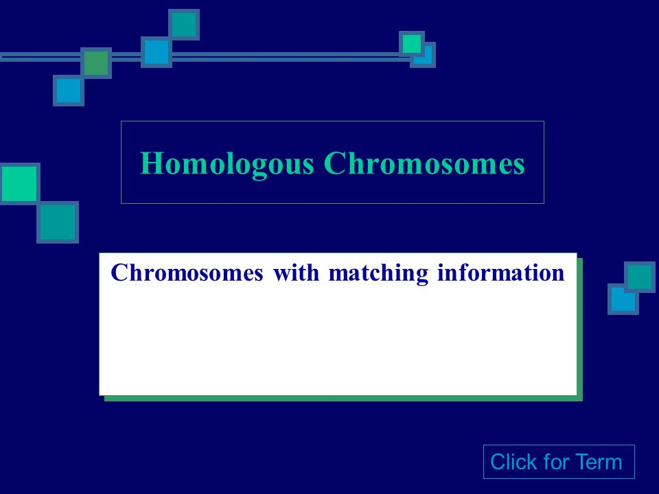 Chromosomes with matching information Click for Term