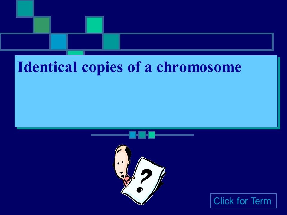 Homologous Chromosomes Chromosomes with matching information Click for Term
