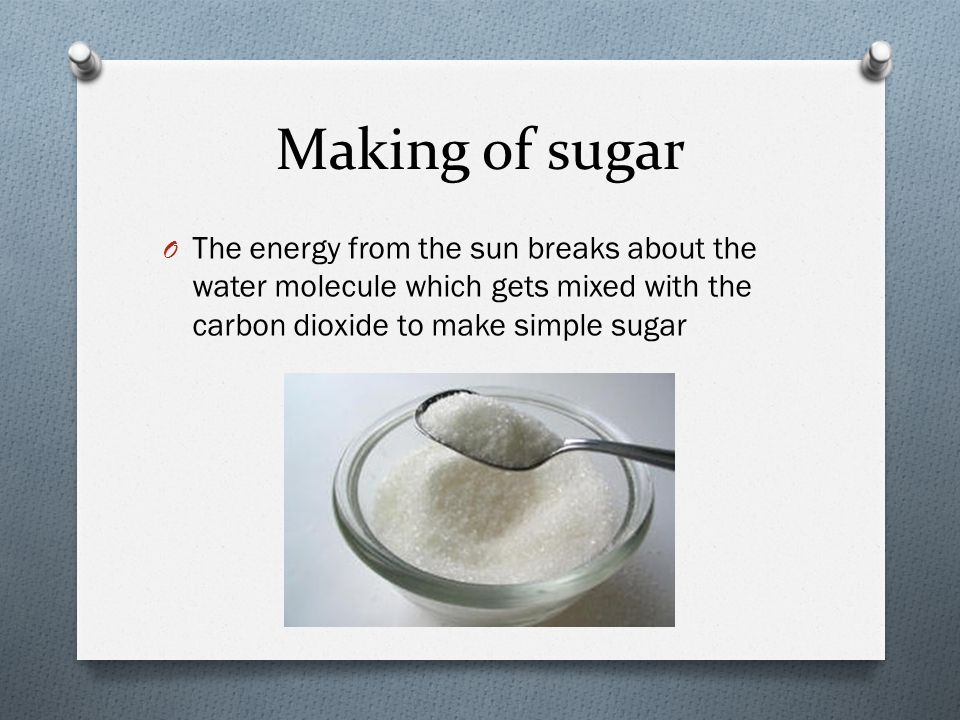 Making of sugar O The energy from the sun breaks about the water molecule which gets mixed with the carbon dioxide to make simple sugar