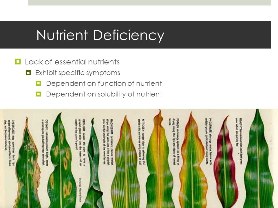 Plant Nutrition Powerpoint adopted from: Powerpoint