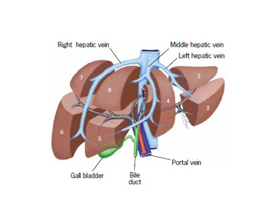 Liver Transplantation Basics In Surgery Ppt Video Online Download