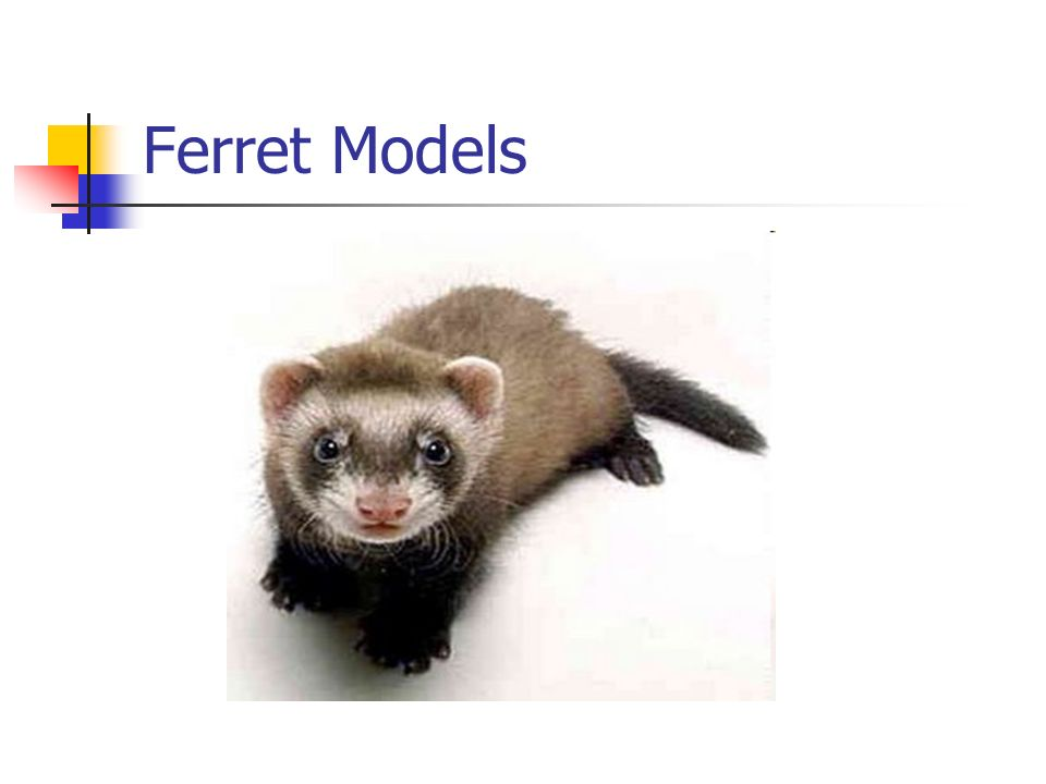 Cystic Fibrosis: Using ferrets as a Disease Model. - ppt download