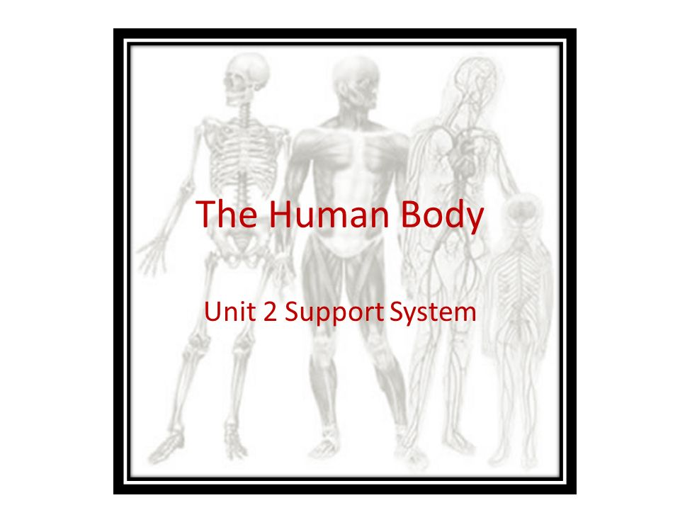 The Human Body Unit 2 Support System. Anatomy and Physiology Anatomy ...