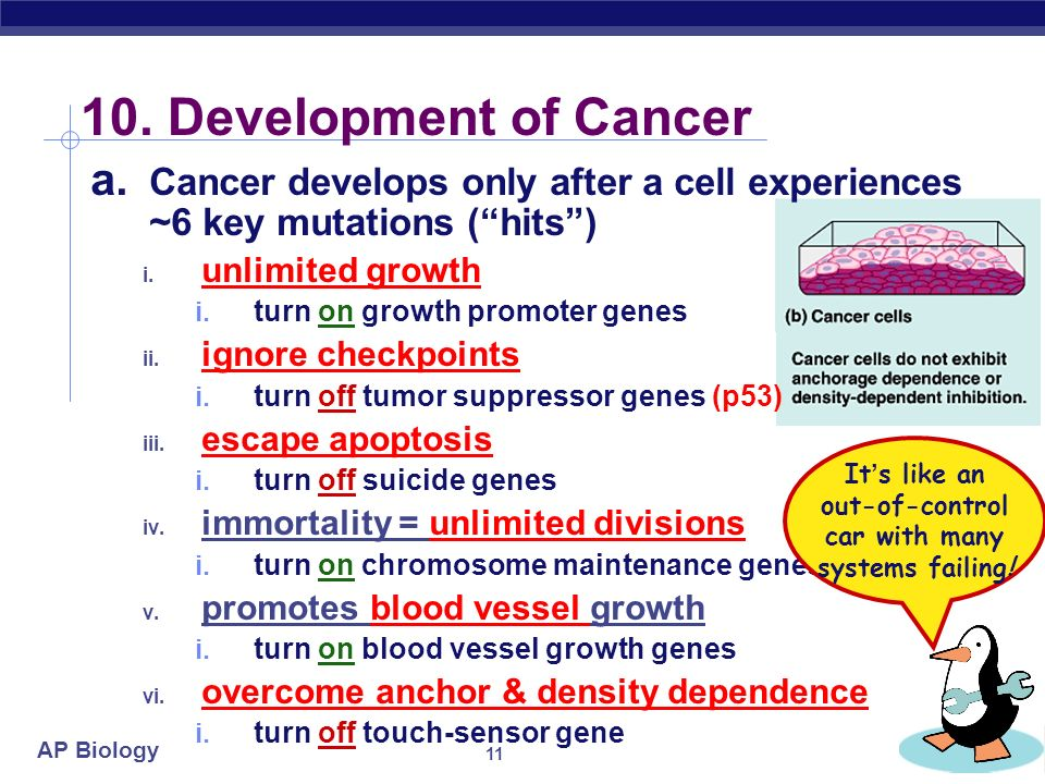 AP Biology 9. Cancer & Cell Growth a. Cancer is essentially a failure of cell division control i.