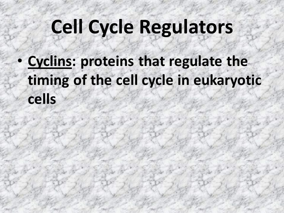 Cell Cycle Regulators Cyclins: proteins that regulate the timing of the cell cycle in eukaryotic cells