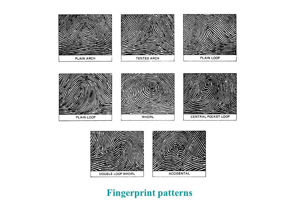Fingerprint Patterns Fingerprints Are Unique Composed Of Friction Enchanting Fingerprint Patterns