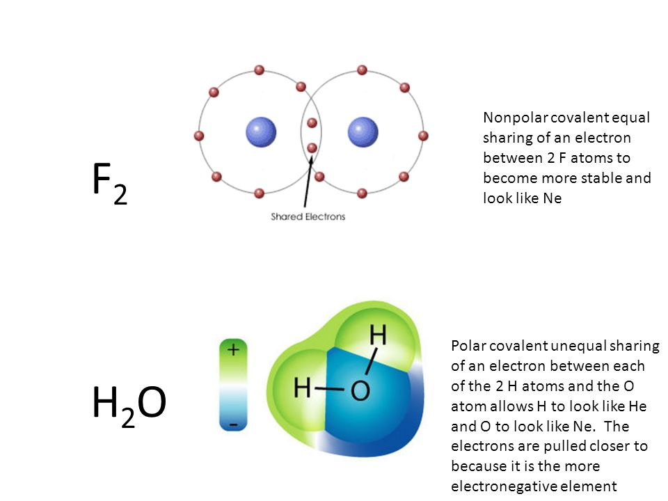 Nonpolar covalent equal sharing of an electron between 2 F atoms to become more stable and look like Ne F2F2 H2OH2O Polar covalent unequal sharing of an electron between each of the 2 H atoms and the O atom allows H to look like He and O to look like Ne.