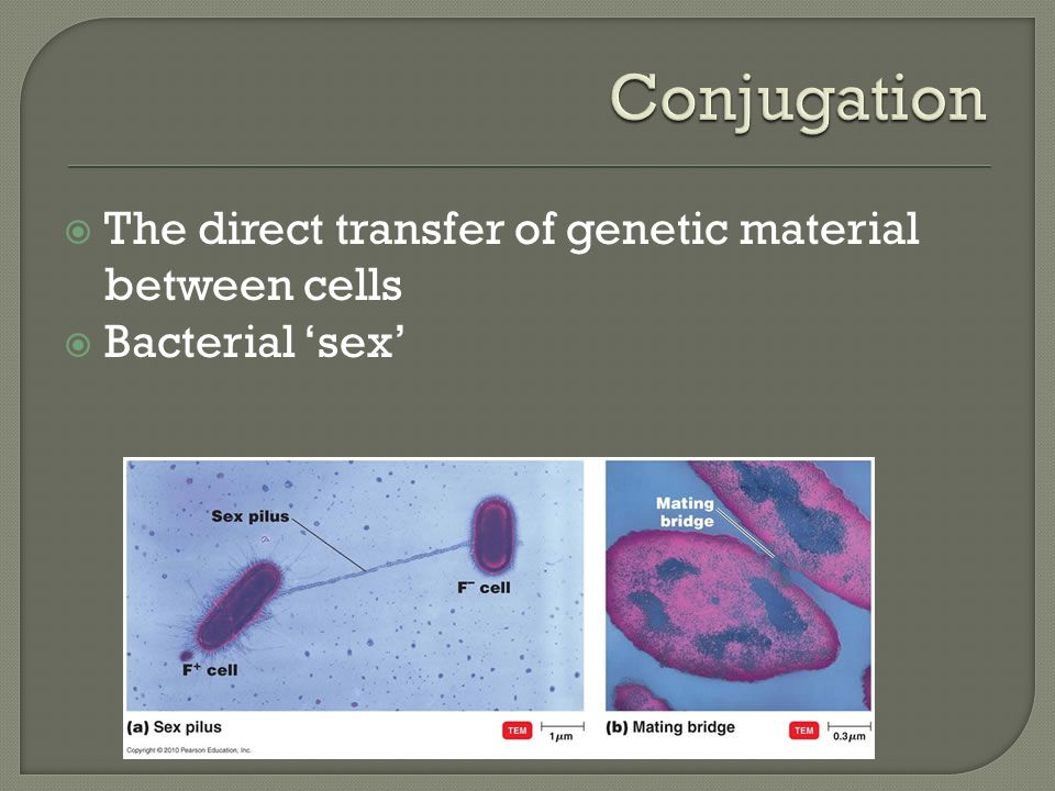  The direct transfer of genetic material between cells  Bacterial 'sex'