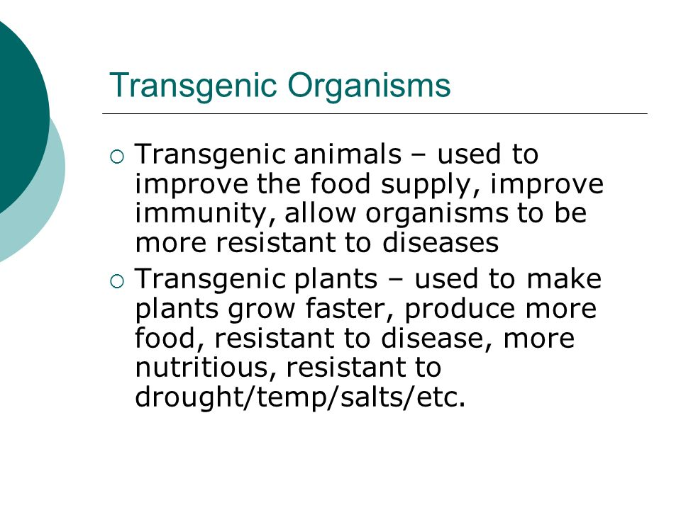 Transgenic Organisms  Transgenic animals – used to improve the food supply, improve immunity, allow organisms to be more resistant to diseases  Transgenic plants – used to make plants grow faster, produce more food, resistant to disease, more nutritious, resistant to drought/temp/salts/etc.