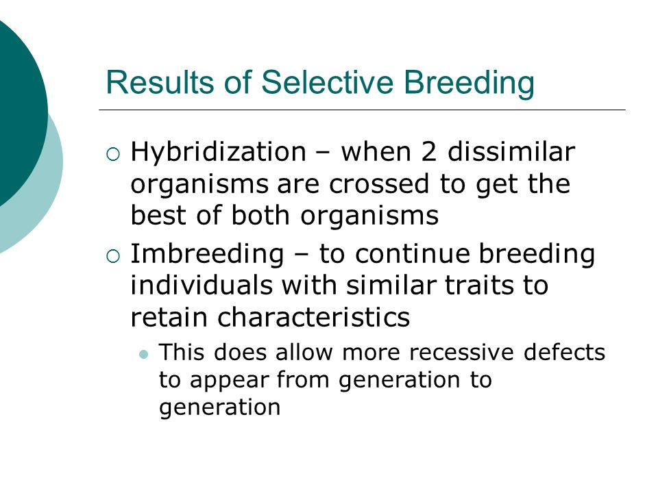Results of Selective Breeding  Hybridization – when 2 dissimilar organisms are crossed to get the best of both organisms  Imbreeding – to continue breeding individuals with similar traits to retain characteristics This does allow more recessive defects to appear from generation to generation