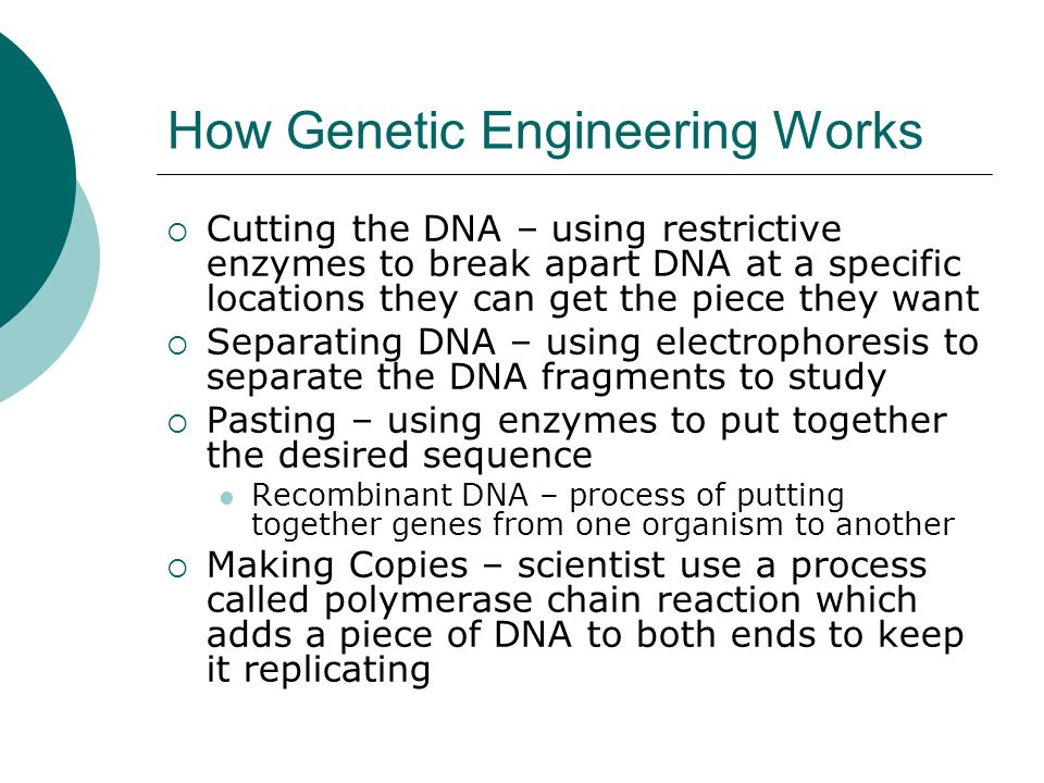 How Genetic Engineering Works  Cutting the DNA – using restrictive enzymes to break apart DNA at a specific locations they can get the piece they want  Separating DNA – using electrophoresis to separate the DNA fragments to study  Pasting – using enzymes to put together the desired sequence Recombinant DNA – process of putting together genes from one organism to another  Making Copies – scientist use a process called polymerase chain reaction which adds a piece of DNA to both ends to keep it replicating