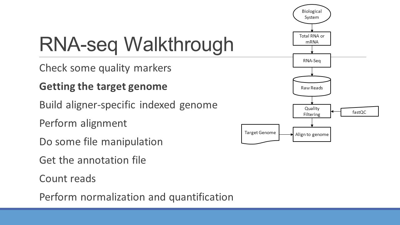 RNA-seq Walkthrough Check some quality markers Getting the target genome Build aligner-specific indexed genome Perform alignment Do some file manipulation Get the annotation file Count reads Perform normalization and quantification Total RNA or mRNA RNA-Seq Align to genome Quality Filtering Raw Reads Biological System fastQC Target Genome