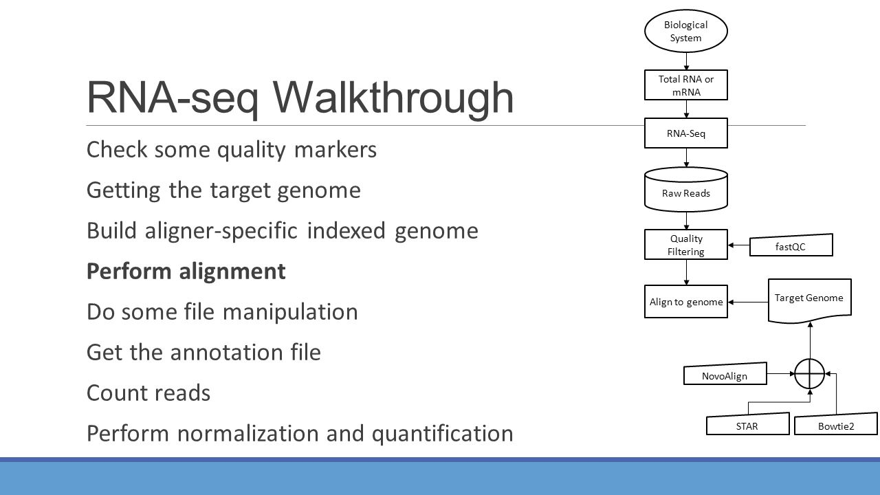 RNA-seq Walkthrough Check some quality markers Getting the target genome Build aligner-specific indexed genome Perform alignment Do some file manipulation Get the annotation file Count reads Perform normalization and quantification Total RNA or mRNA RNA-Seq Align to genome NovoAlign Bowtie2 Quality Filtering Raw Reads Biological System STAR fastQC Target Genome