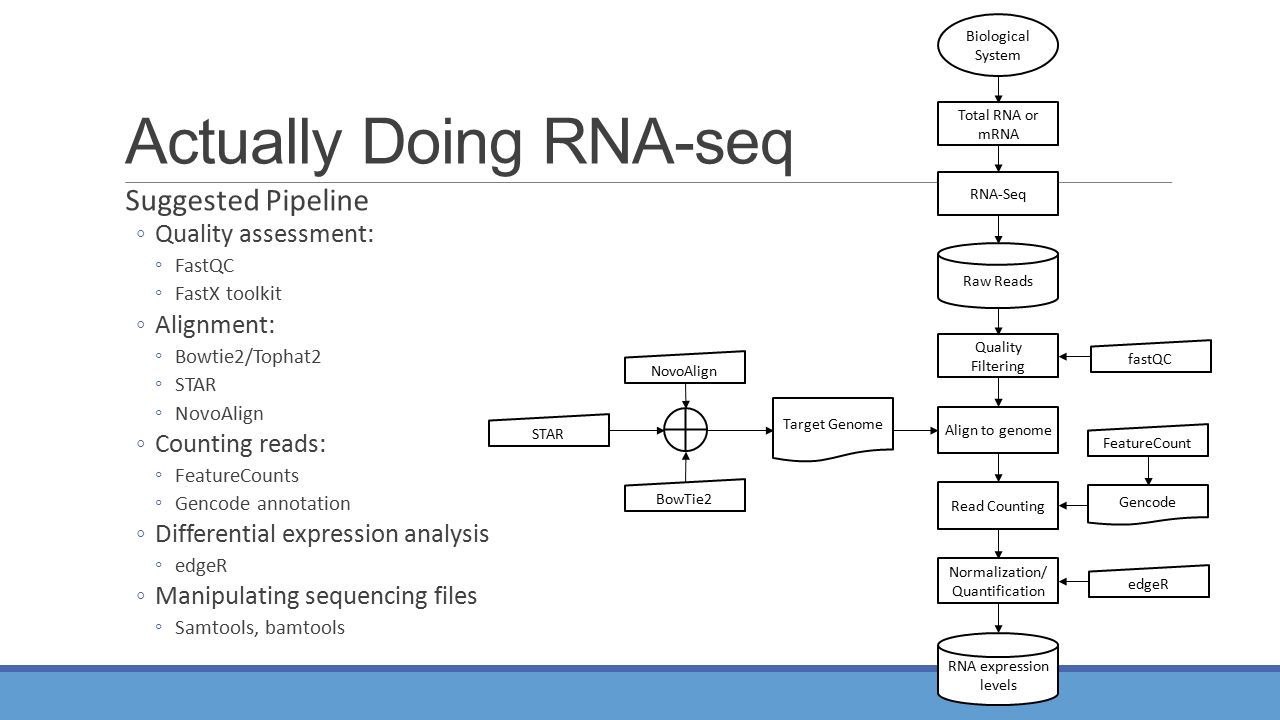 Actually Doing RNA-seq Suggested Pipeline ◦Quality assessment: ◦FastQC ◦FastX toolkit ◦Alignment: ◦Bowtie2/Tophat2 ◦STAR ◦NovoAlign ◦Counting reads: ◦FeatureCounts ◦Gencode annotation ◦Differential expression analysis ◦edgeR ◦Manipulating sequencing files ◦Samtools, bamtools Total RNA or mRNA RNA-Seq RNA expression levels Align to genome NovoAlign BowTie2 Normalization/ Quantification edgeR Quality Filtering Raw Reads Biological System STAR fastQC Read Counting FeatureCount Gencode Target Genome