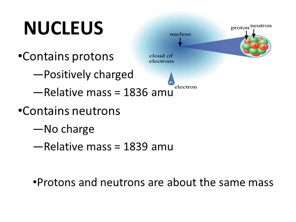 NUCLEUS Contains protons —Positively charged —Relative mass = 1836 amu Contains neutrons —No charge —Relative mass = 1839 amu Protons and neutrons are about the same mass