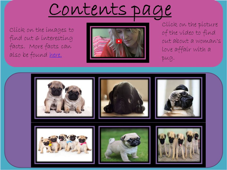 Pugs This Is My Presentation On Pugs And Its Going To Tell You