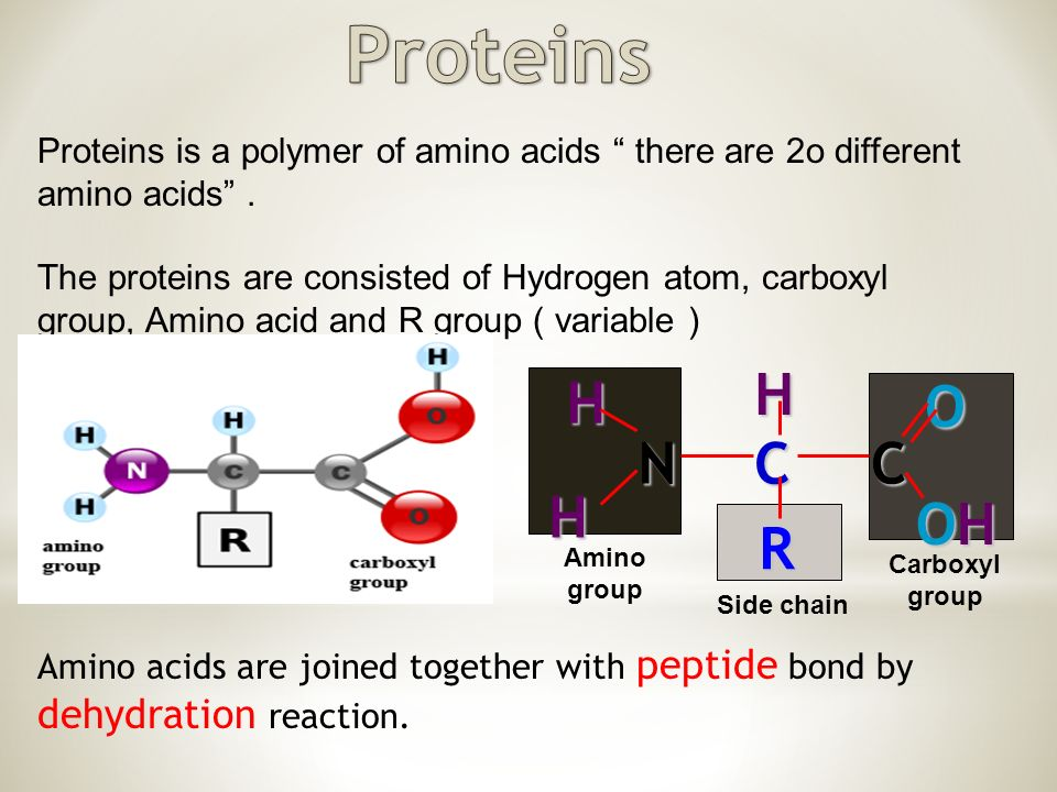Proteins is a polymer of amino acids there are 2o different amino acids .