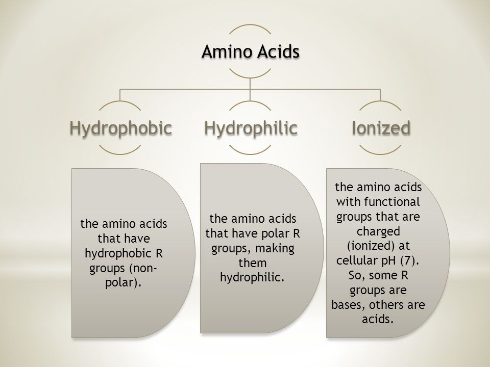 Amino Acids HydrophobicHydrophilicIonized the amino acids that have hydrophobic R groups (non- polar).