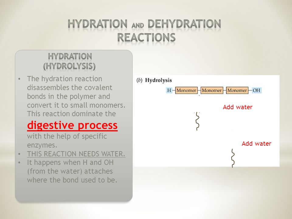The hydration reaction disassembles the covalent bonds in the polymer and convert it to small monomers.