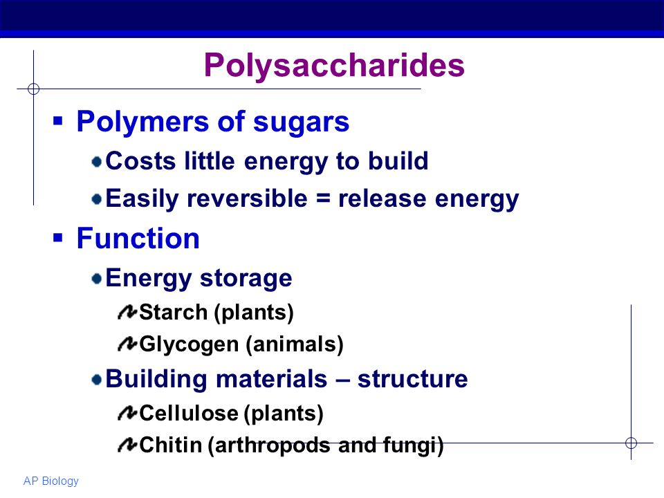 AP Biology Polysaccharides  Polymers of sugars Costs little energy to build Easily reversible = release energy  Function Energy storage Starch (plants) Glycogen (animals) Building materials – structure Cellulose (plants) Chitin (arthropods and fungi)