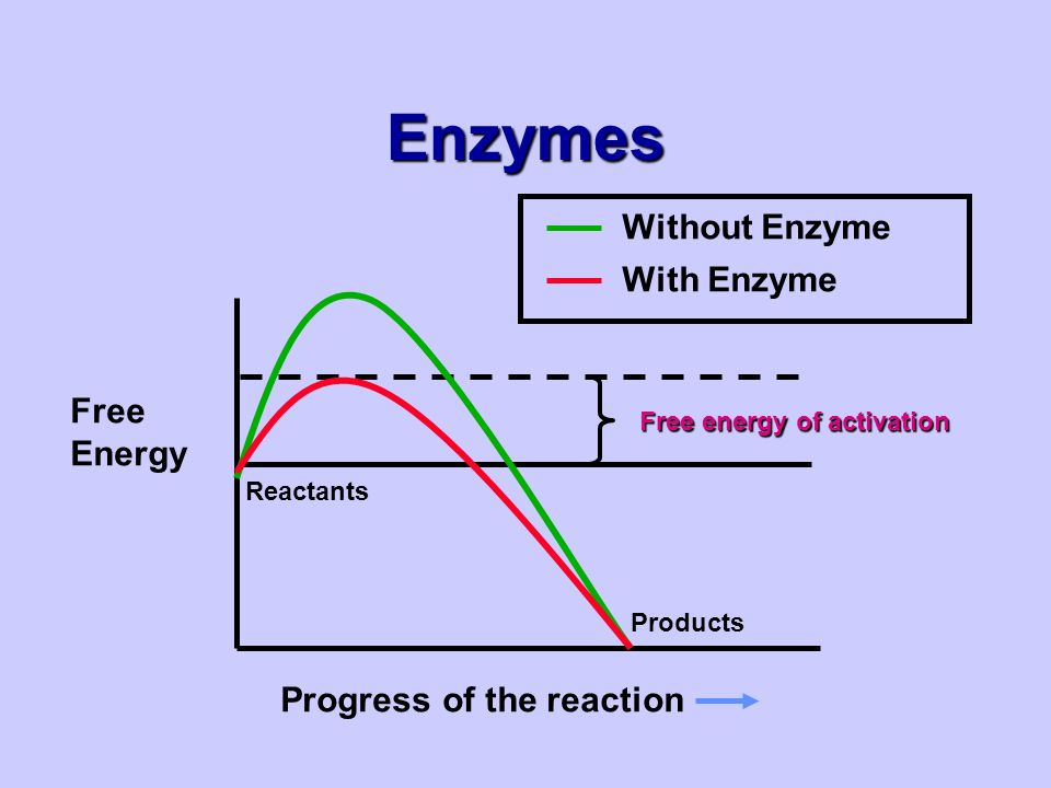 Enzymes Free Energy Progress of the reaction Reactants Products Free energy of activation Without Enzyme With Enzyme