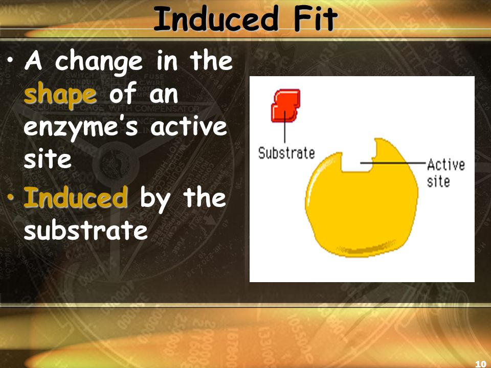10 Induced Fit shapeA change in the shape of an enzyme's active site InducedInduced by the substrate