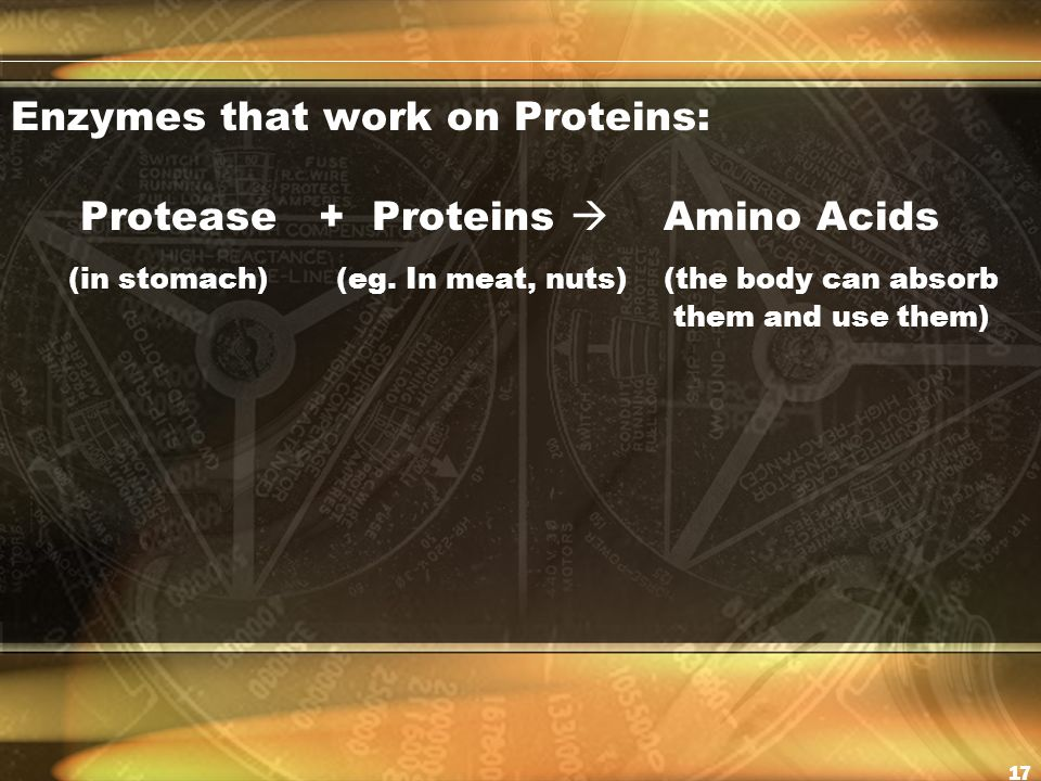 Enzymes that work on Proteins: Protease + Proteins  Amino Acids (in stomach) (eg.