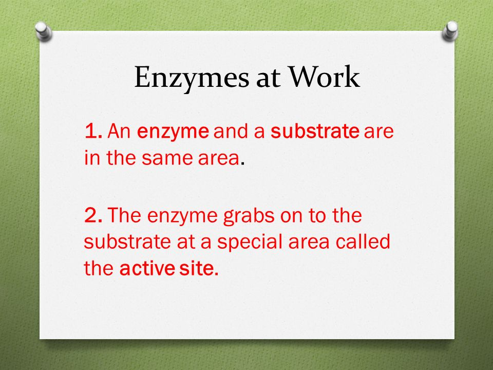 Enzymes at Work 1. An enzyme and a substrate are in the same area.