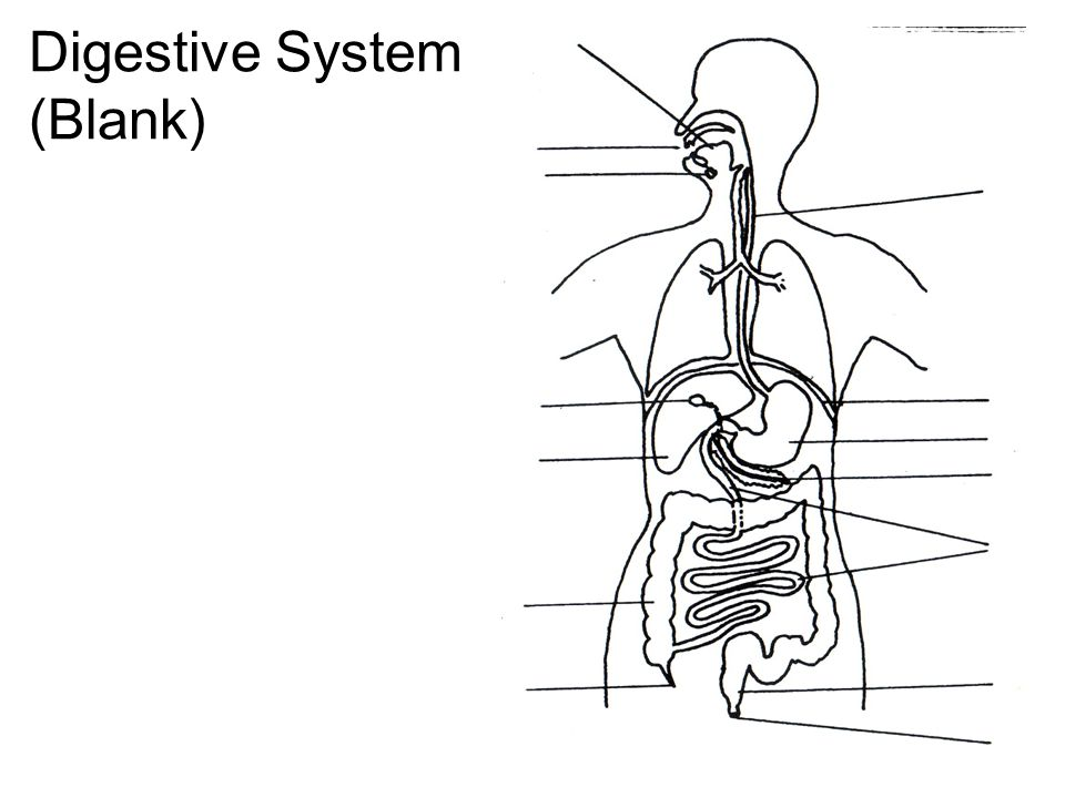 graphic relating to Digestive System Printable called Digestion. Digestive Procedure (Blank) Digestive Method