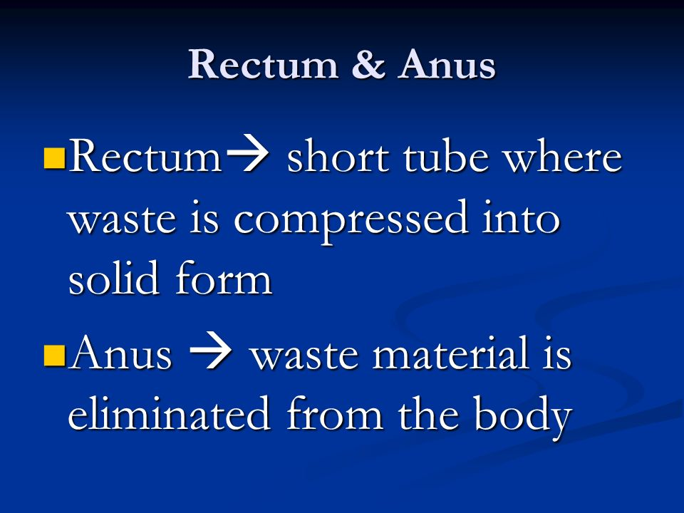 Rectum & Anus Rectum  short tube where waste is compressed into solid form Rectum  short tube where waste is compressed into solid form Anus  waste material is eliminated from the body Anus  waste material is eliminated from the body