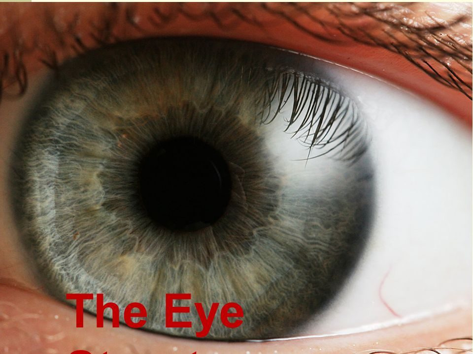 The Eye Structure. External Parts of the Eye (Tear Duct) - ppt download