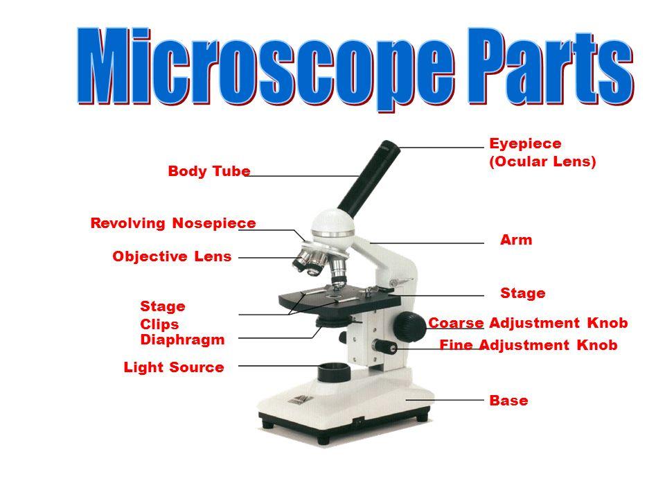 fine adjustment knob function microscope