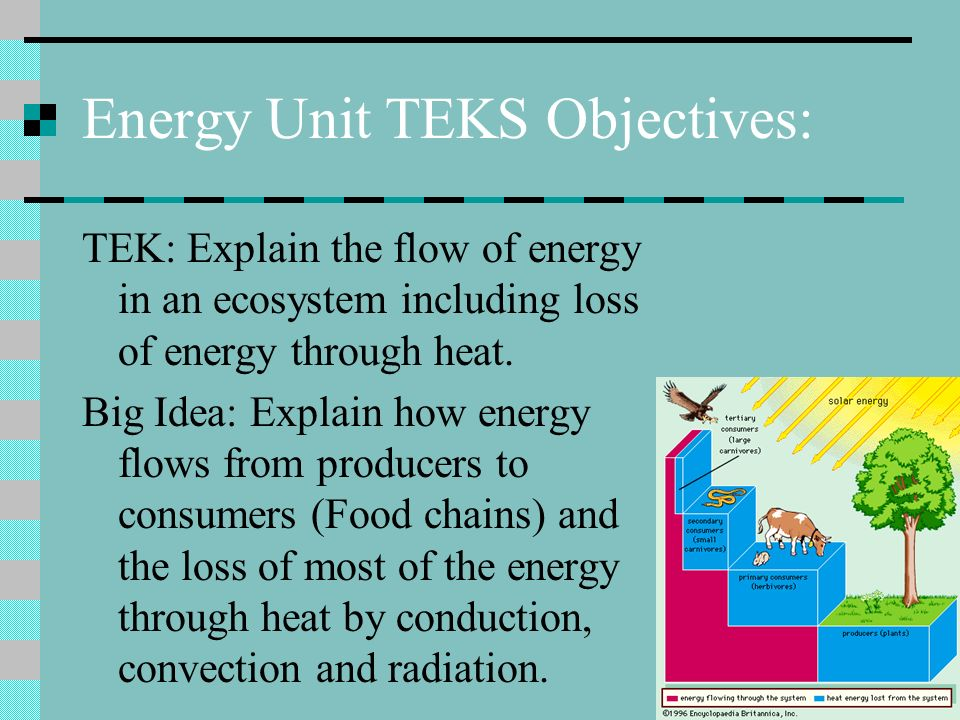 Energy Unit TEKS Objectives: TEK: Explain the flow of energy in an ecosystem including loss of energy through heat.