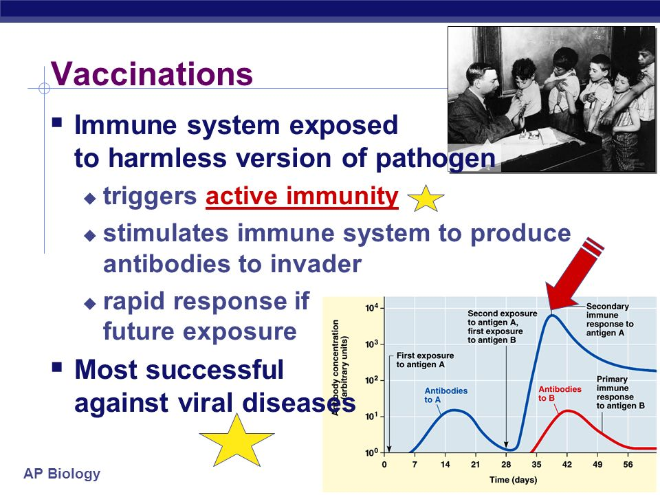 AP Biology 1° vs 2° response to disease  Memory B cells allow a rapid, amplified response with future exposure to pathogen