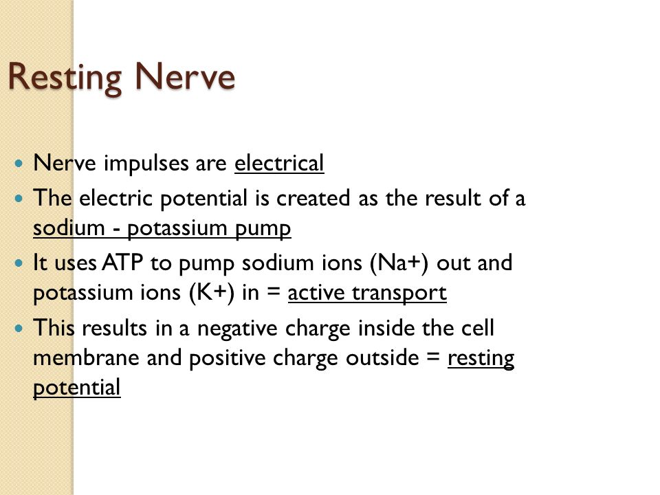 Resting Nerve Nerve impulses are electrical The electric potential is created as the result of a sodium - potassium pump It uses ATP to pump sodium ions (Na+) out and potassium ions (K+) in = active transport This results in a negative charge inside the cell membrane and positive charge outside = resting potential