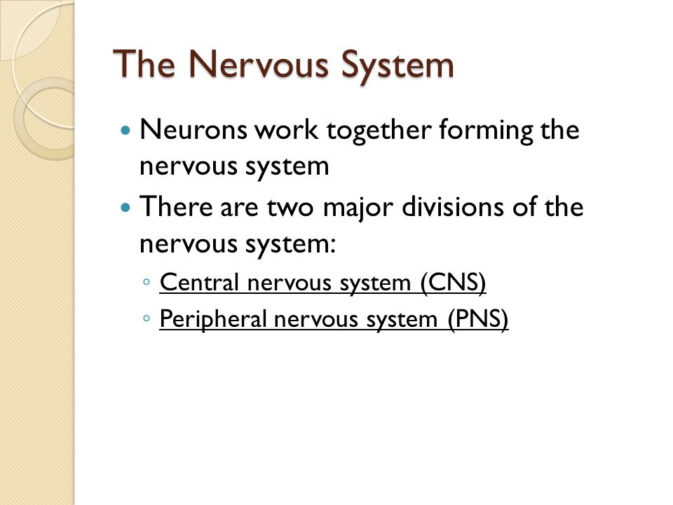 The Nervous System Neurons work together forming the nervous system There are two major divisions of the nervous system: ◦ Central nervous system (CNS) ◦ Peripheral nervous system (PNS)