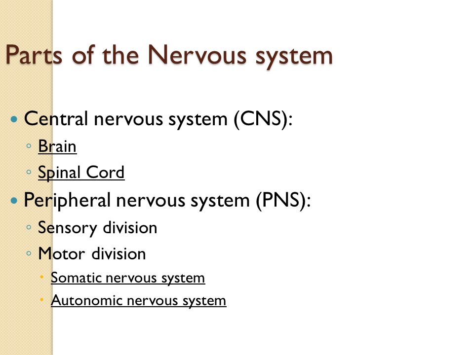 Parts of the Nervous system Central nervous system (CNS): ◦ Brain ◦ Spinal Cord Peripheral nervous system (PNS): ◦ Sensory division ◦ Motor division  Somatic nervous system  Autonomic nervous system