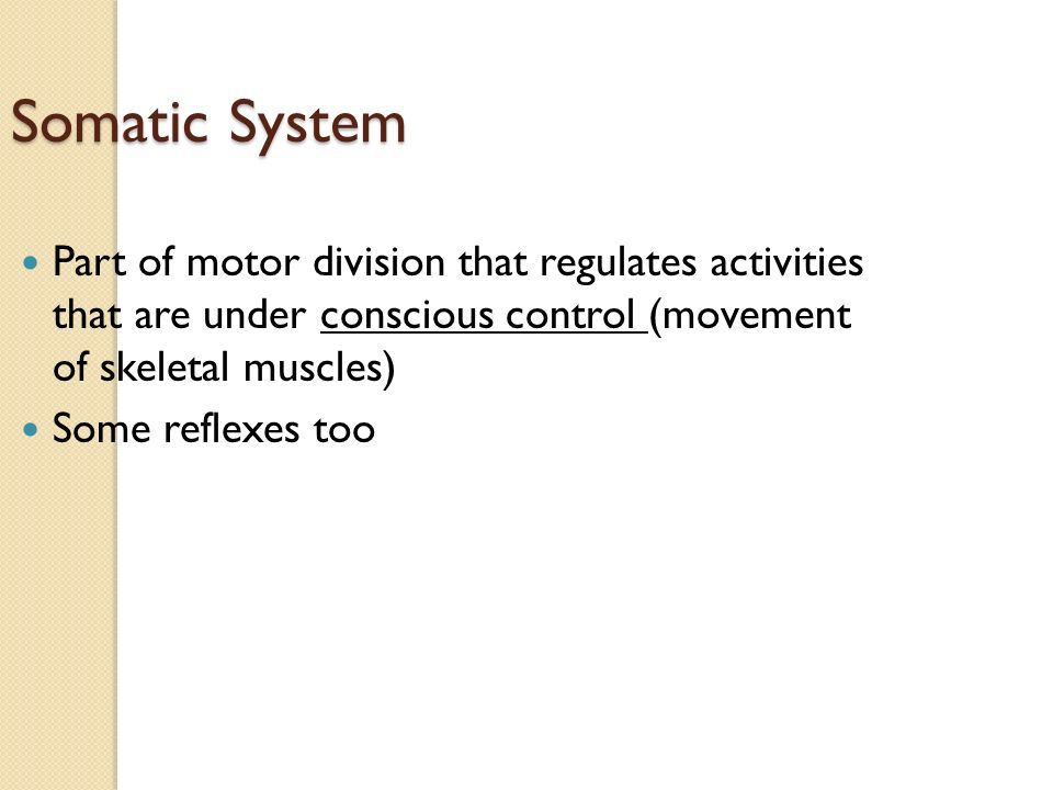 Somatic System Part of motor division that regulates activities that are under conscious control (movement of skeletal muscles) Some reflexes too