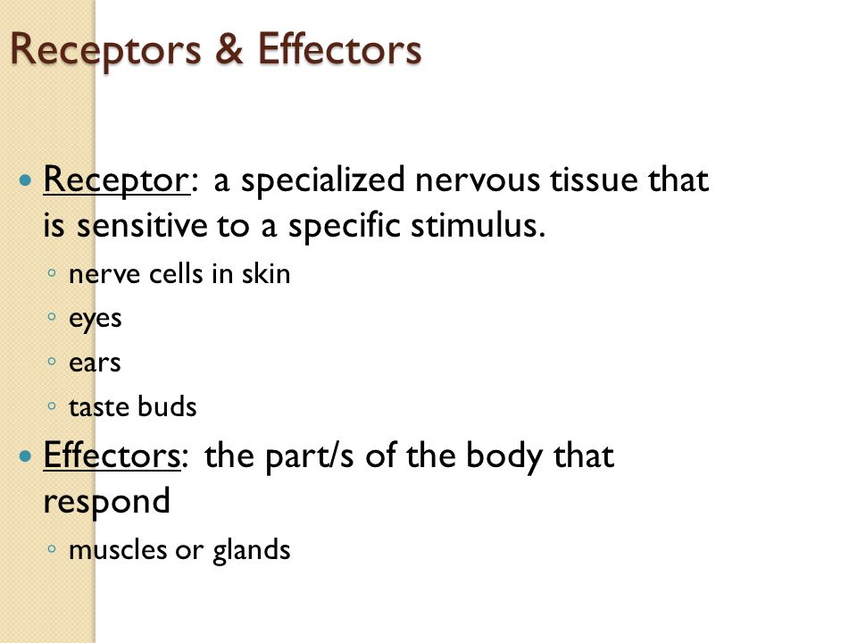 Receptors & Effectors Receptor: a specialized nervous tissue that is sensitive to a specific stimulus.