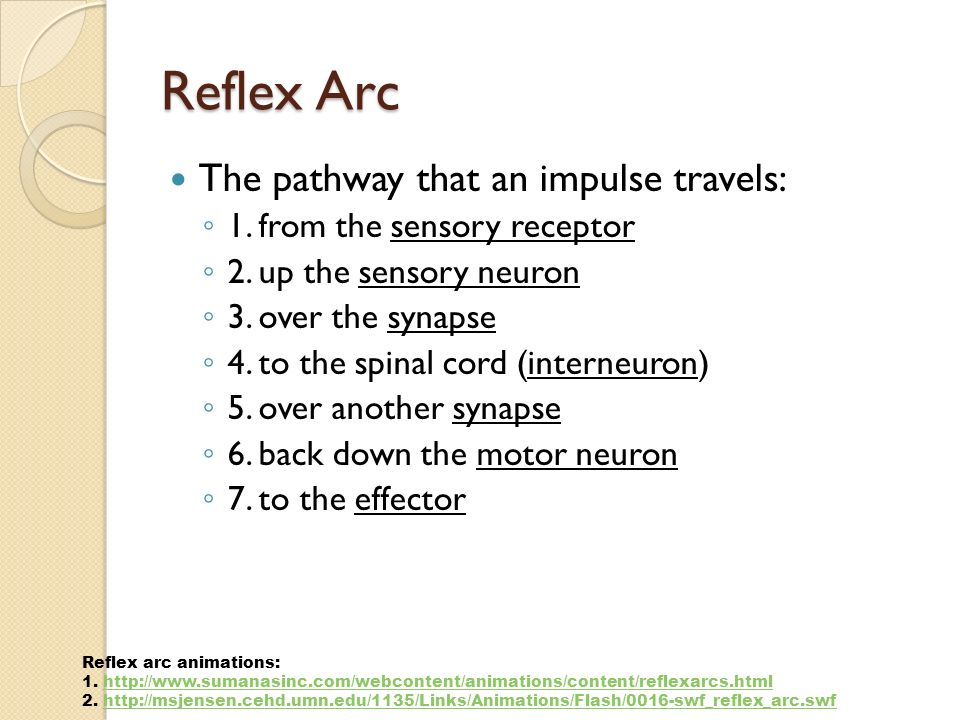 Reflex Arc The pathway that an impulse travels: ◦ 1.