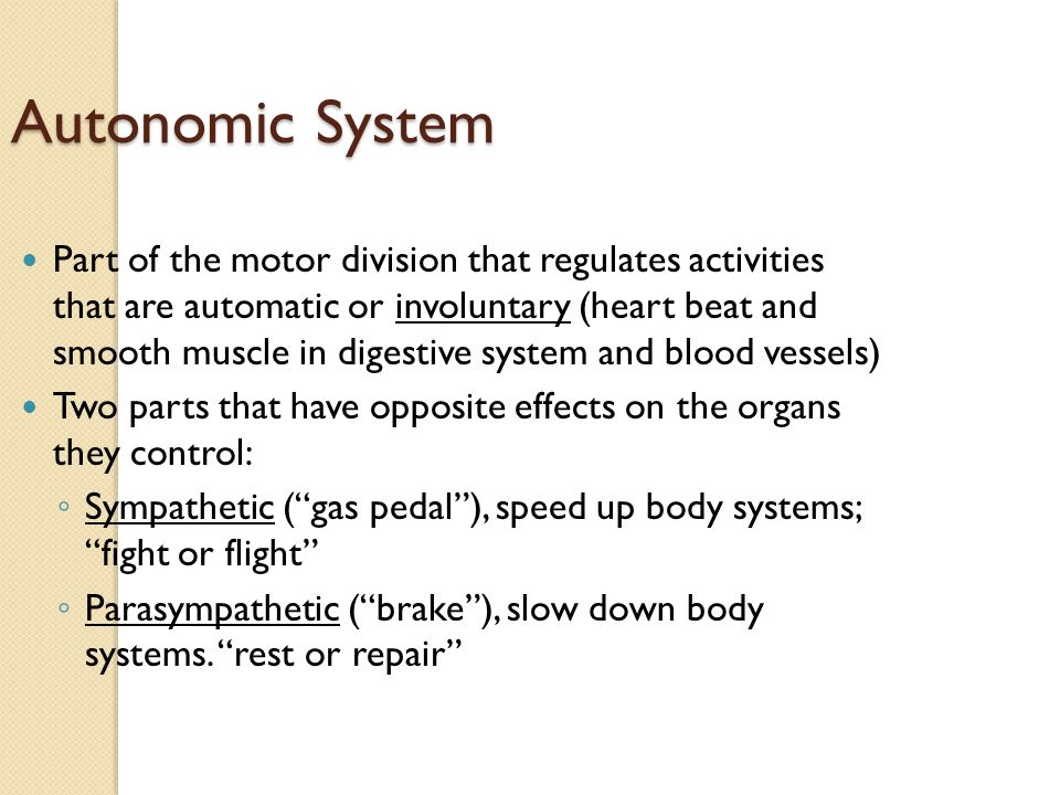 Autonomic System Part of the motor division that regulates activities that are automatic or involuntary (heart beat and smooth muscle in digestive system and blood vessels) Two parts that have opposite effects on the organs they control: ◦ Sympathetic ( gas pedal ), speed up body systems; fight or flight ◦ Parasympathetic ( brake ), slow down body systems.